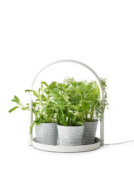 Studia bricka med växtbelysning