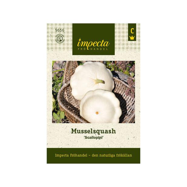 Musselsquash 'Scallopini', Vit