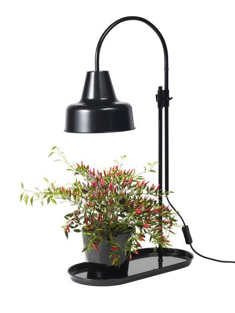 Växtlampa Anoda bord