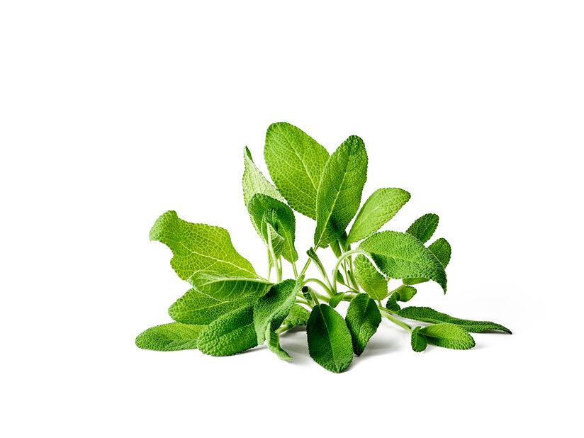 Kryddsalvia KRAV, Ø10.5 cm, Grön