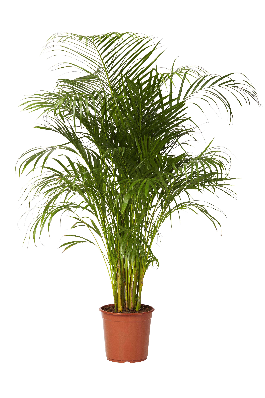 köpa växter malmö