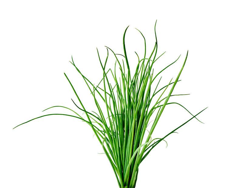 Gräslök, Ø14 cm, Grön