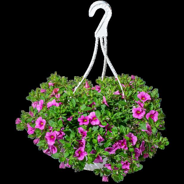 Hängpetunia dubbel, Ø25 cm, Rosa