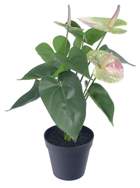 Rosenkalla konstgjord , Höjd 42 cm, Grön