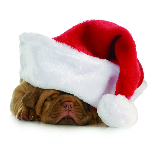 Julservetter Julhund, Ø33 cm, Flerfärgad