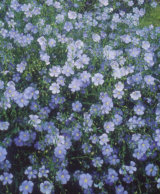 Berglin, Höjd 15 cm, Blå