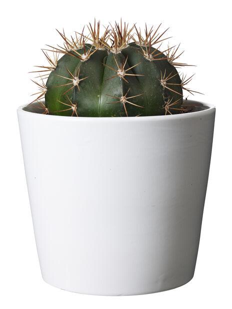 Kaktus mix, Höjd 20 cm, Grön