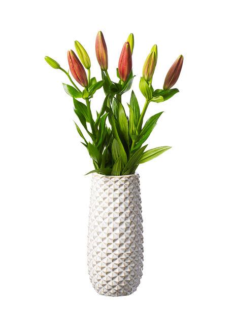 Lilja , Höjd 60 cm, Flera färger