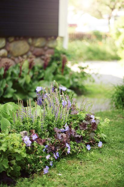 Trädgårdsnäva 'Rozanne', Höjd 15 cm, Rosa
