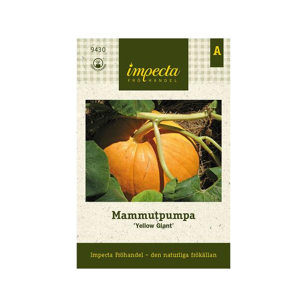 Mammutpumpa 'Yellow Giant', Orange
