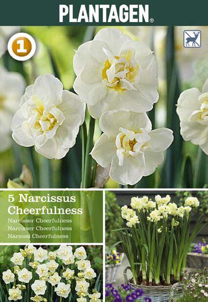 Narciss 'Cheerfulness', Flera färger