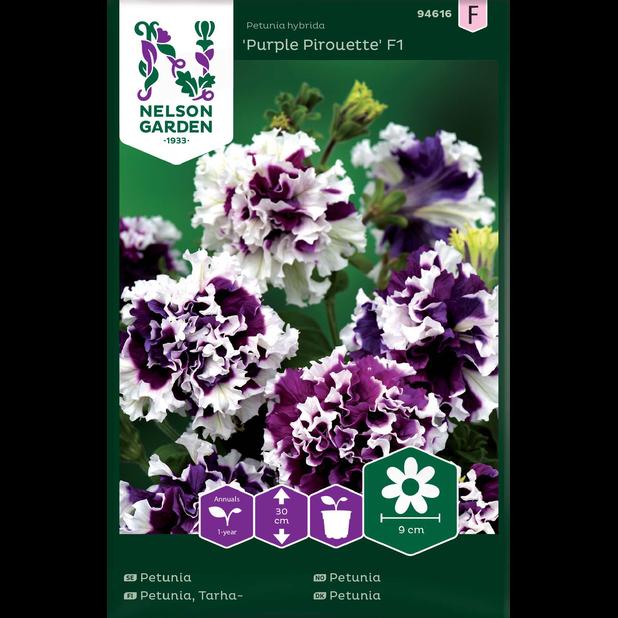 Petunia 'Purple Pirouette' F1, Flerfärgad