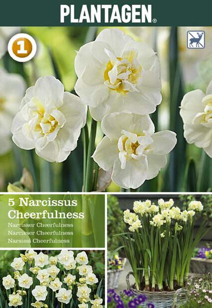 Narciss 'Cheerfulness'