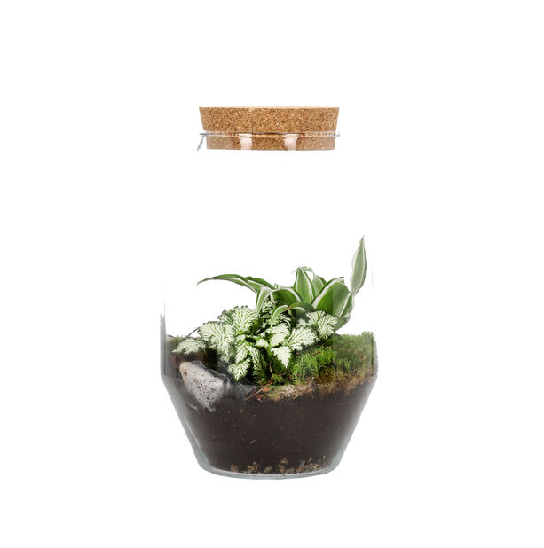 Terrarium Anouk, Höjd 30 cm, Grön