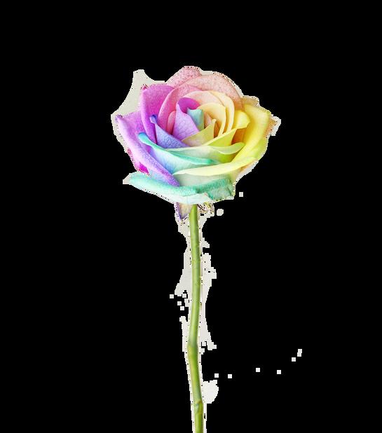 Pride-ros, Höjd 40 cm, Flera färger