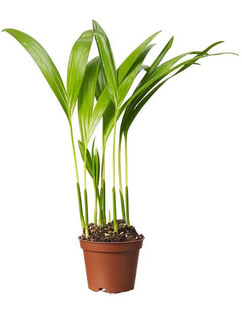 Grönväxt mini