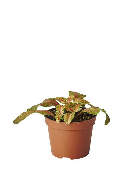 Åderblad mini