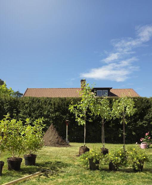 Trädgårdstok 'Goldfinger' , Ø23 cm, Gul