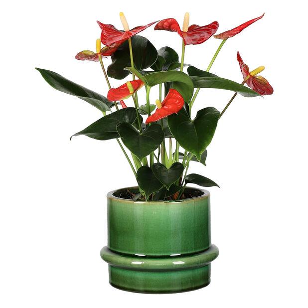 Kruka Gunilla, Ø16 cm, Grön
