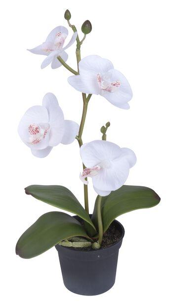 Orkidé mini konstgjord, Höjd 25 cm, Vit