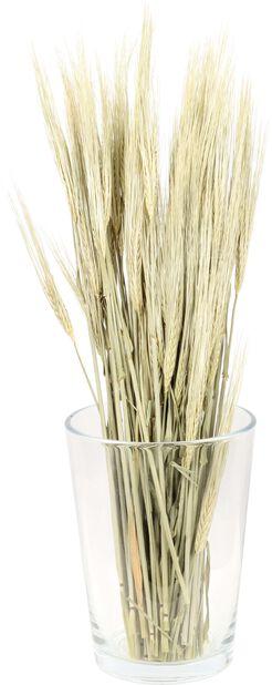 Korn torkad, Höjd 50 cm, Brun