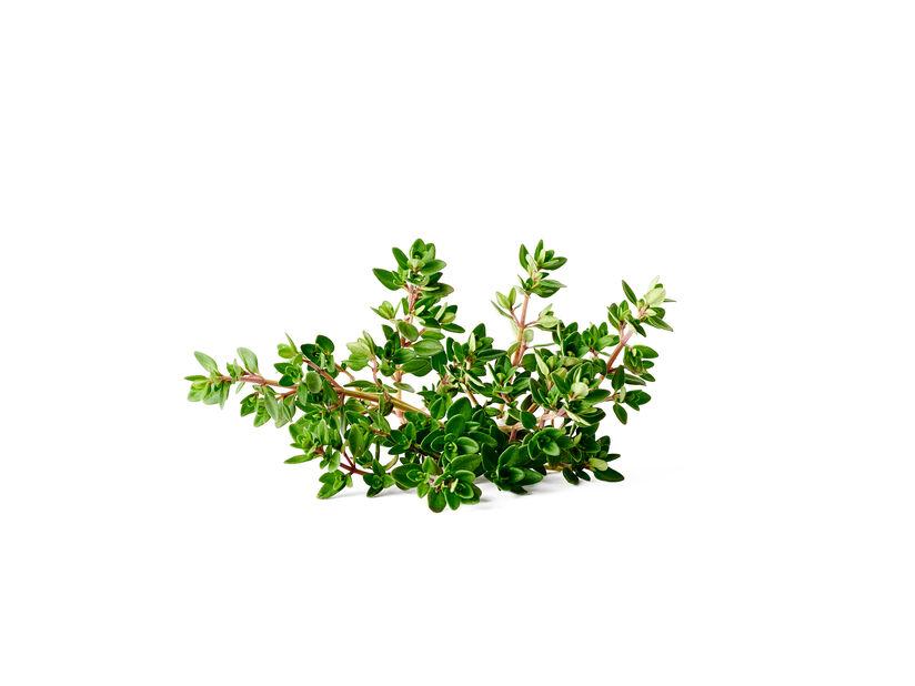 Kryddtimjan KRAV, Ø10.5 cm, Grön