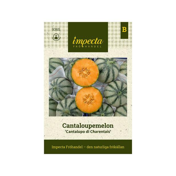 Cantaloupemelon 'Cantalupo di Charentais', Grön