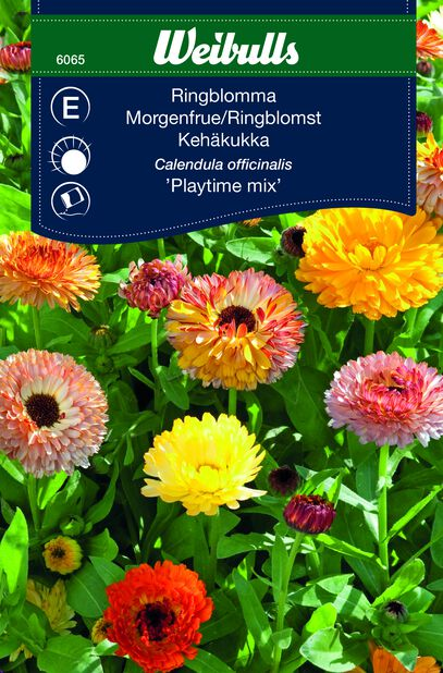 Ringblomma 'Playtime mix'