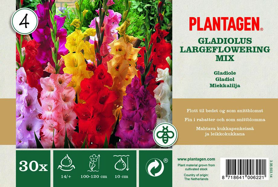 Storblommiga gladioler mix, Flerfärgad