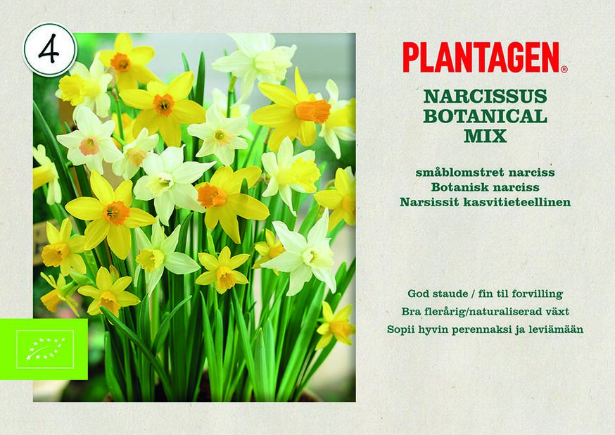 Narciss mix
