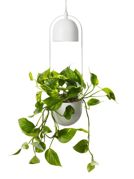 Alora växtbelysning med ampel Ø18cm