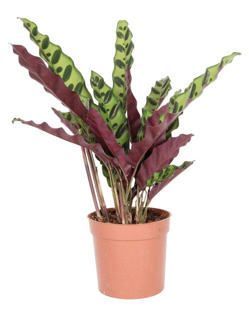 Marmorblad, Höjd 65 cm, Grön