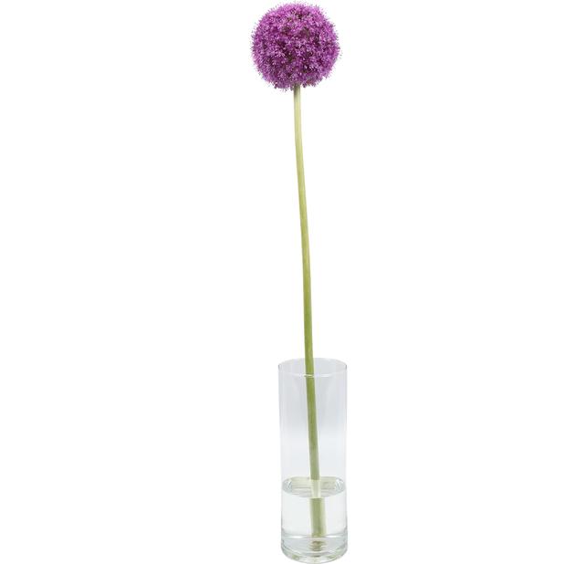 Allium, Höjd 60 cm, Flera färger