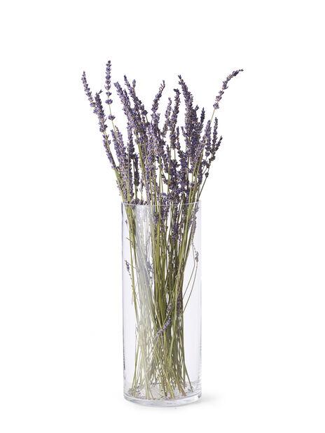 Lavendel, Höjd 50 cm, Blå