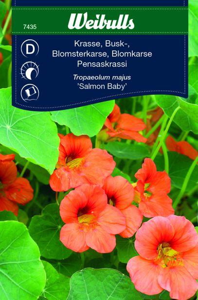 Indiankrasse 'Salmon Baby'