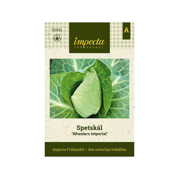 Spetskål 'Wheelers Imperial', Grön