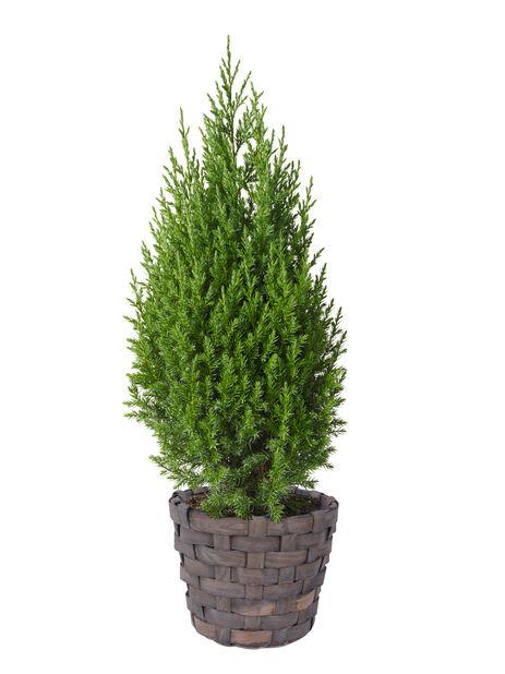 Träkorg 26 cm grå