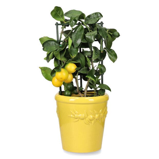 Kruka Lemon, Ø24 cm, Gul