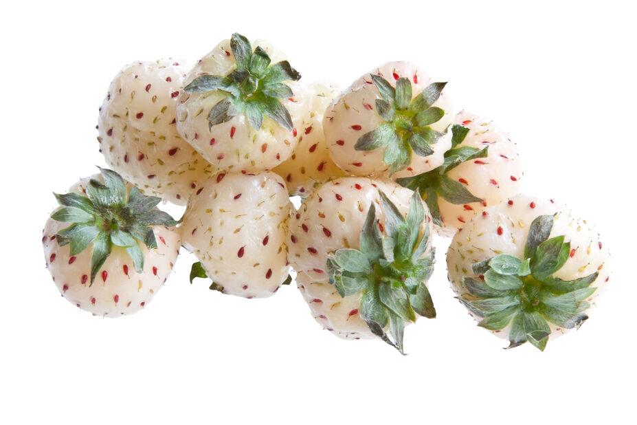 Jordgubbe 'Ananas White'