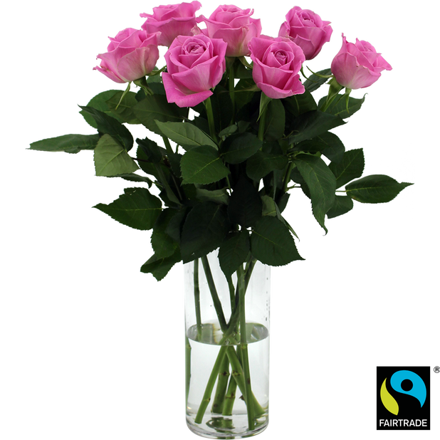 Rosor, Höjd 50 cm, Rosa