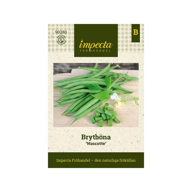 Brytböna 'Mascotte', Grön