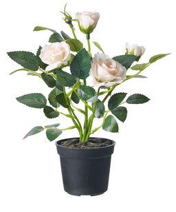 Blå Orkide Plantagen