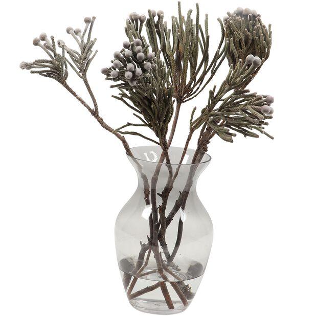 Kaaps Brunia, Höjd 40 cm, Silver