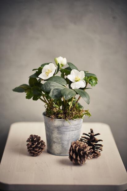 Julros , Ø10.5 cm, Vit