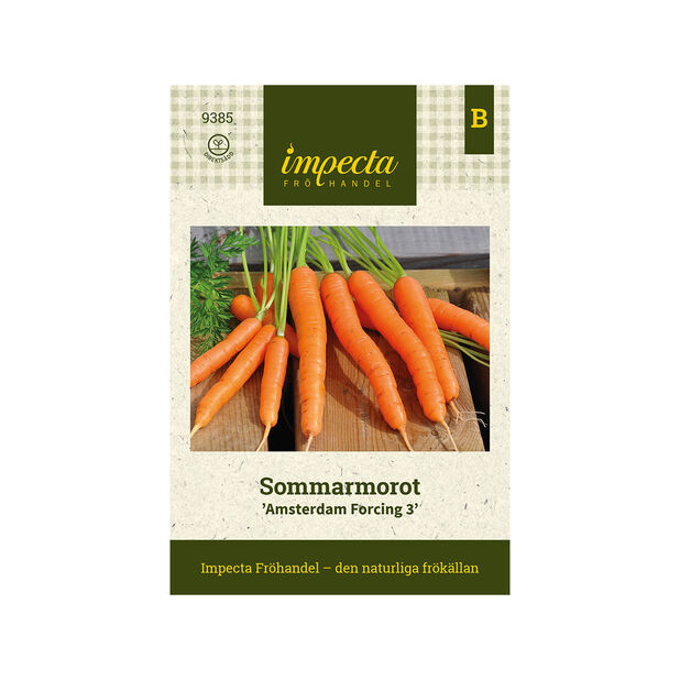 Sommarmorot 'Amsterdam Forcing 3', Orange