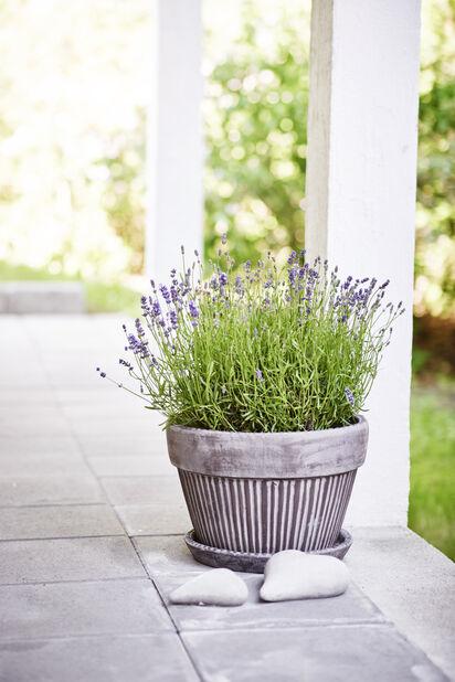 Planteringsskål Kelly med fat, Ø38 cm, Grå
