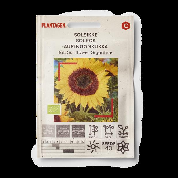 Solros 'Tall Sunflower Giganteus'