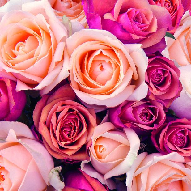 Servetter rosor, Bredd 33 cm, Rosa