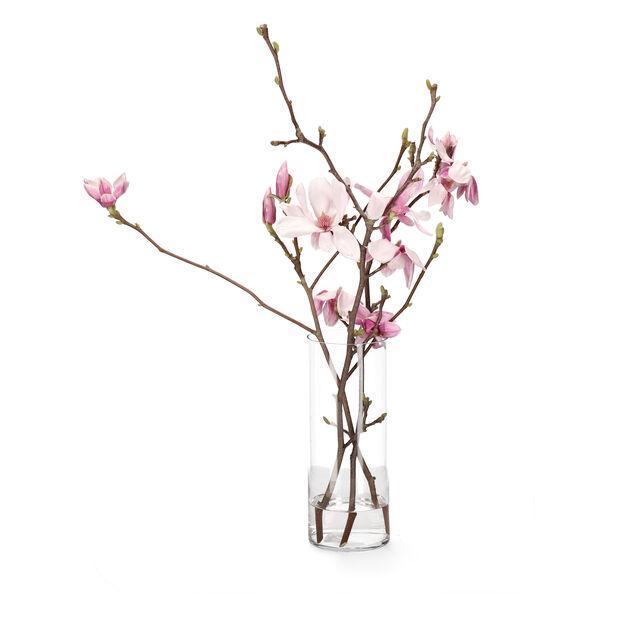 Magnolia, Höjd 60 cm, Flera färger