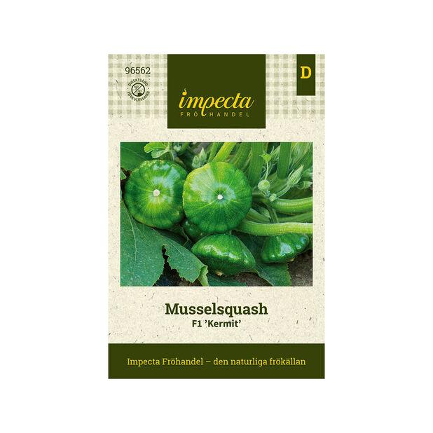Musselsquash  F1 'Kermit', Grön